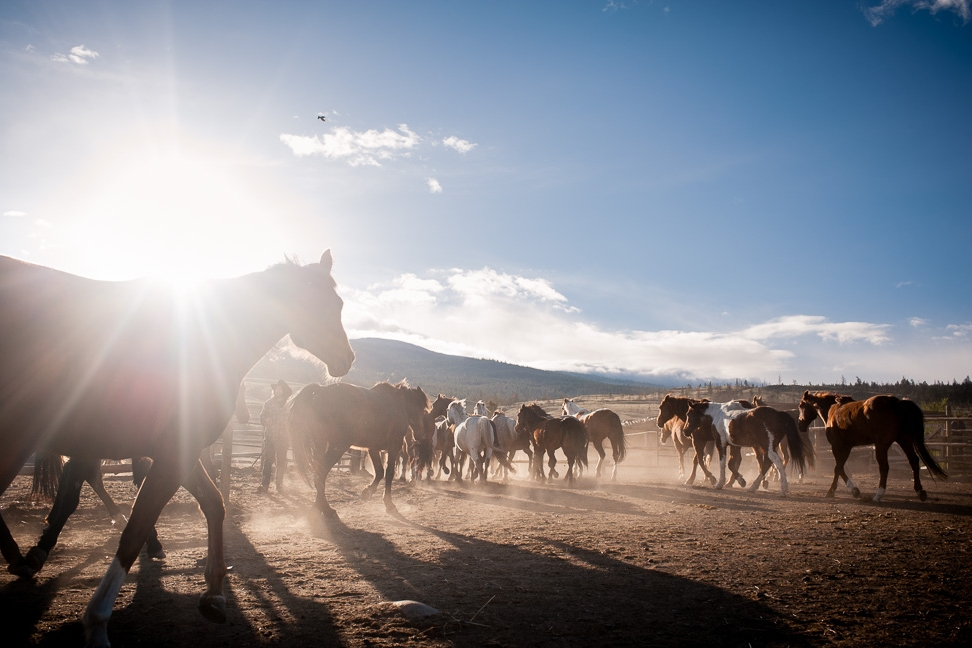 running-horses-photographer-bc
