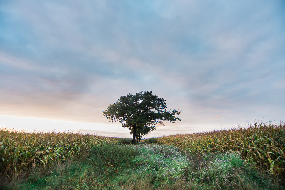 belgium-tree-field-photographer