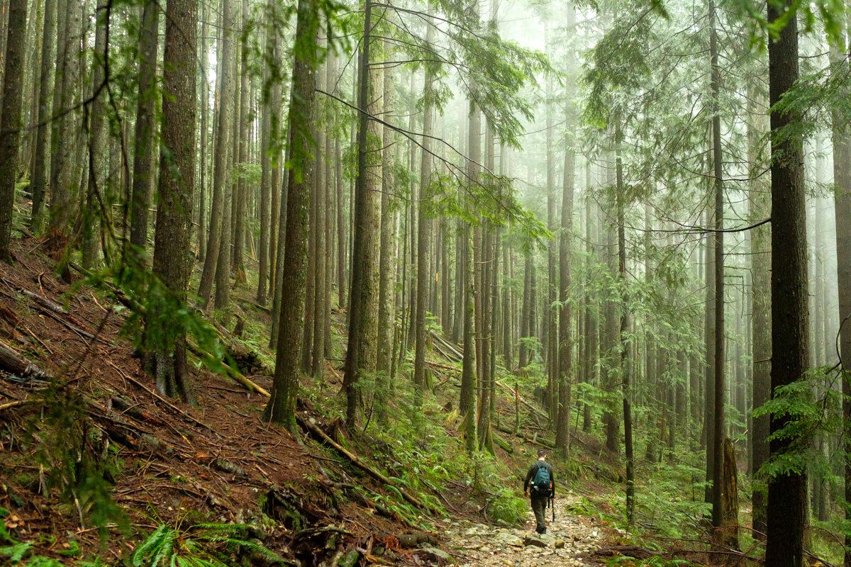 Sawblade Falls Hike in Coquitlam
