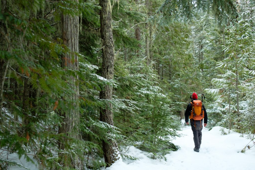 Jelger hiking forest Wells Gray Provincial Park
